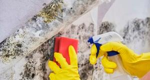 Купить очиститель фасадов и не только в Омске